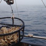 Commercial Dungeness Crab Season Pushed Back Again To Dec. 31