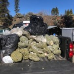 450 Pounds Of 'Black Market' Pot Seized In Trinity County