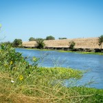 Feds Agree To Expand Yolo Bypass Fish Migration Corridor