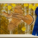Three-Time Winner For California Upland Bird Stamp Contest
