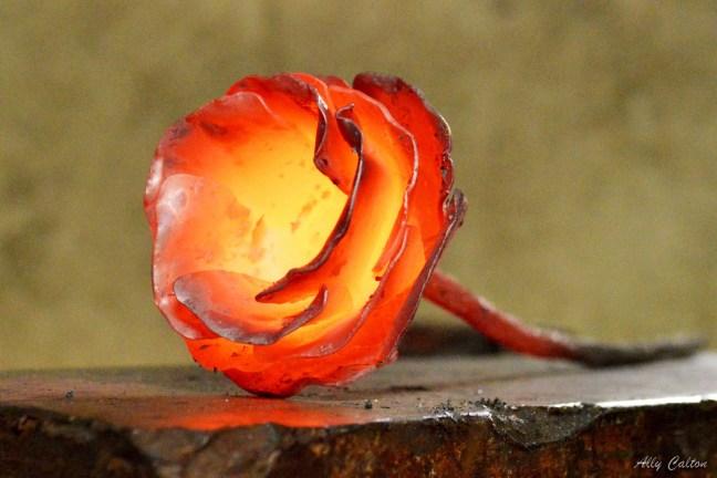 iron rose