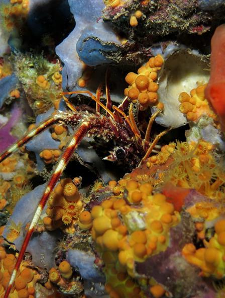 Riqueza de los fondos marinos isla de Benidorm 1