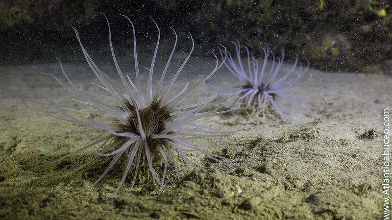 Riqueza de los fondos marinos isla de Benidorm 5