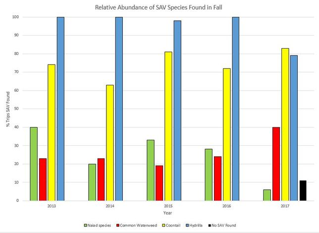 Graph showing relative abundance of SAV species found in fall