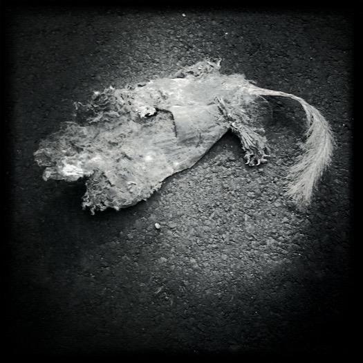 Road Kill, Atlanta, GA
