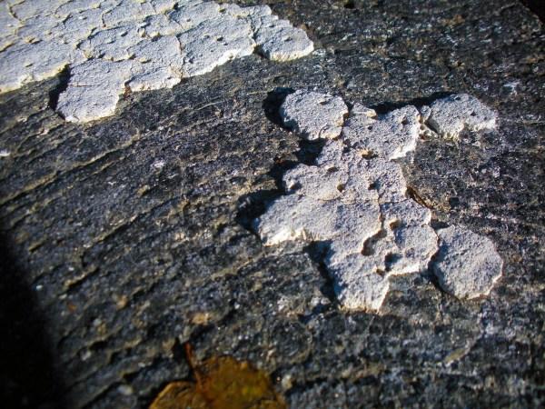 Road Paint (chipped), Atlanta, Ga ©2018 Calvin Burgamy