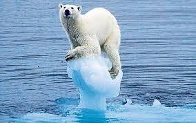 Polar Bear Balancing Success