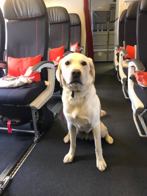 Flying with a Dog in Cabin: Airplane Travel With A Dog