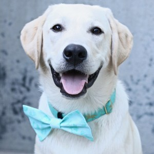 how to make homemade dog bowties