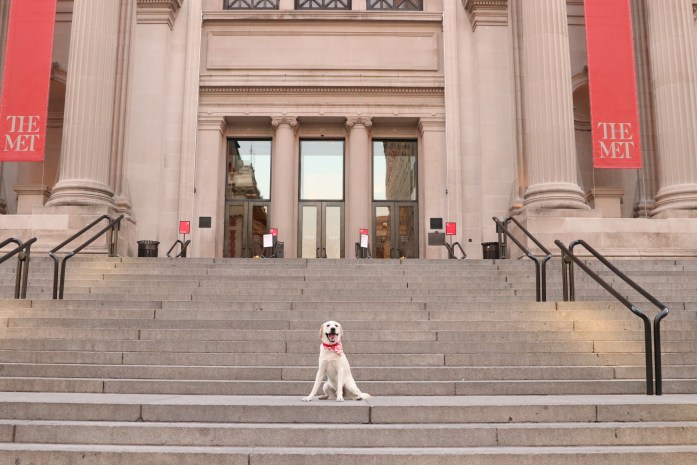 dog sitting on the steps of the metropolitan museum of art