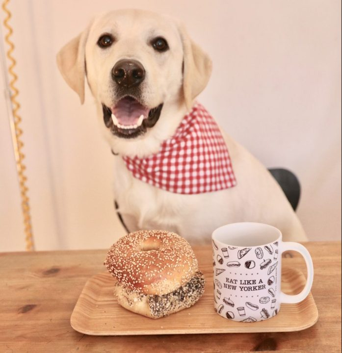 dog with bagels and mug in new york city. dog is wearing a red checkered bandana