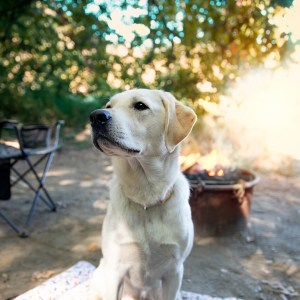 what to bring camping with your dog