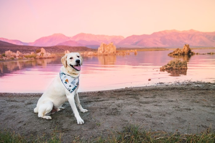 dog friendly mono lake