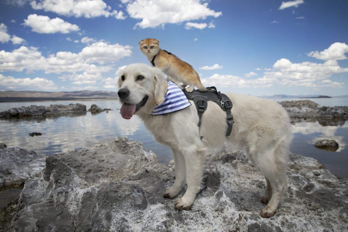 dog and cat standing at mono lake in mammoth lakes
