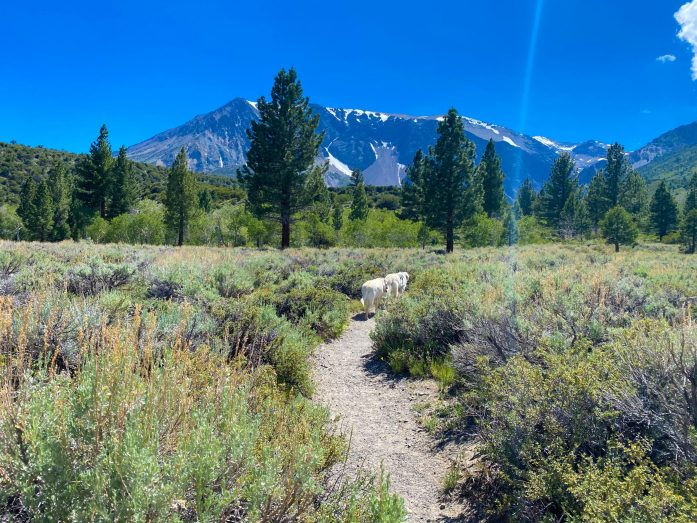 the dog friendly trail to parker lake in mammoth lakes