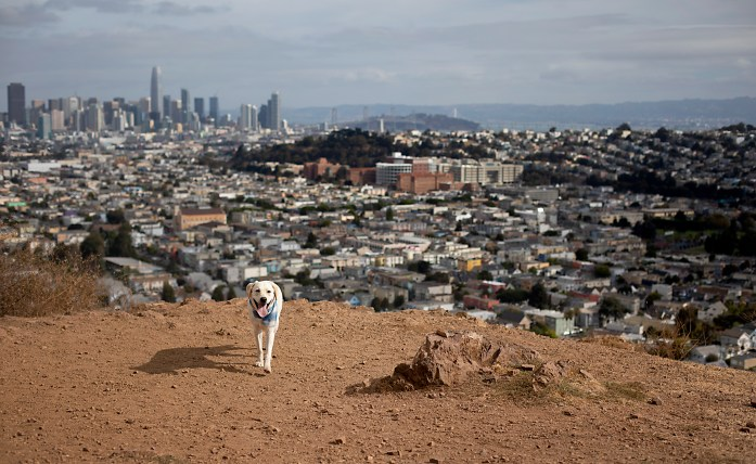 training a dog to stay with a city landscape behind him