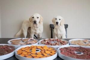 steps to make dehydrated dog treats at home in the dehydrator