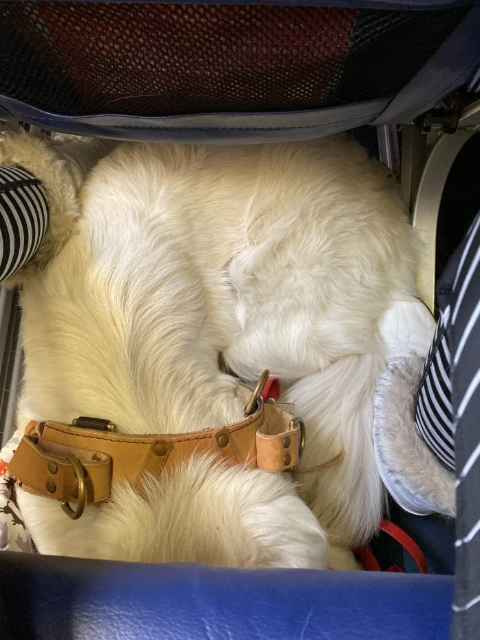 service dog on airplane cabin