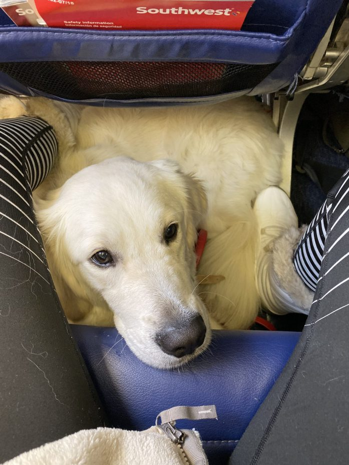 service dog in airplane cabin under seat