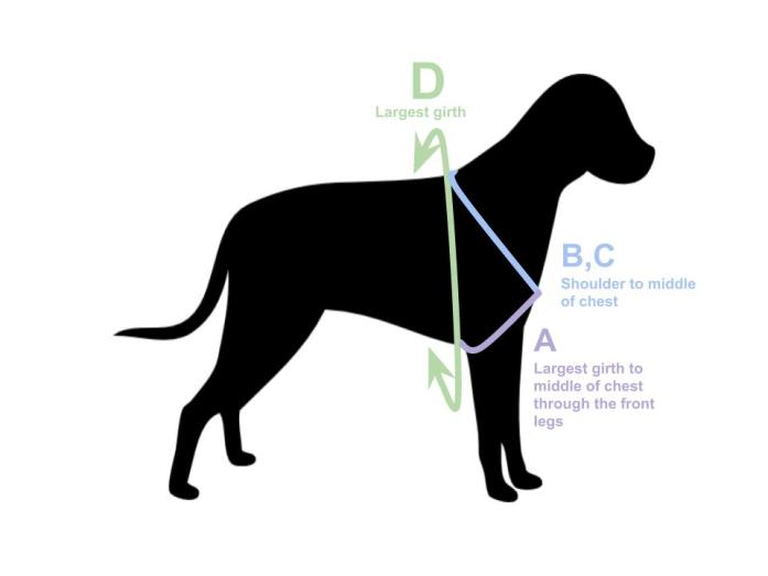 how to measure a dog harness