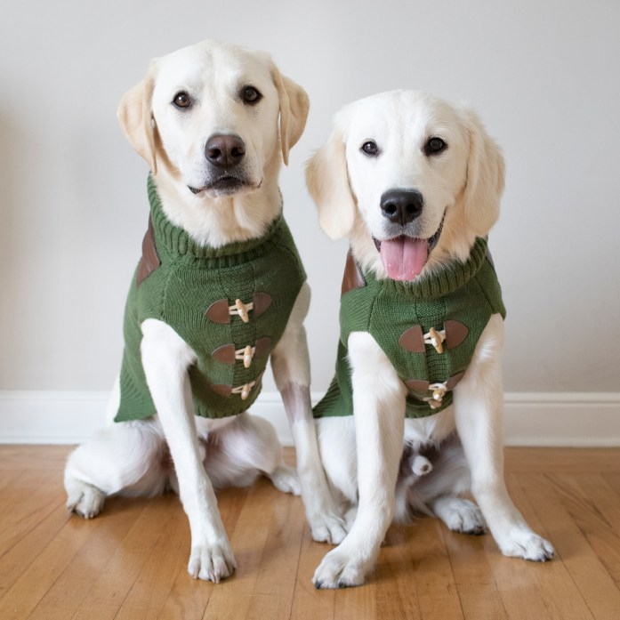 dogs wearing matching green sweaters