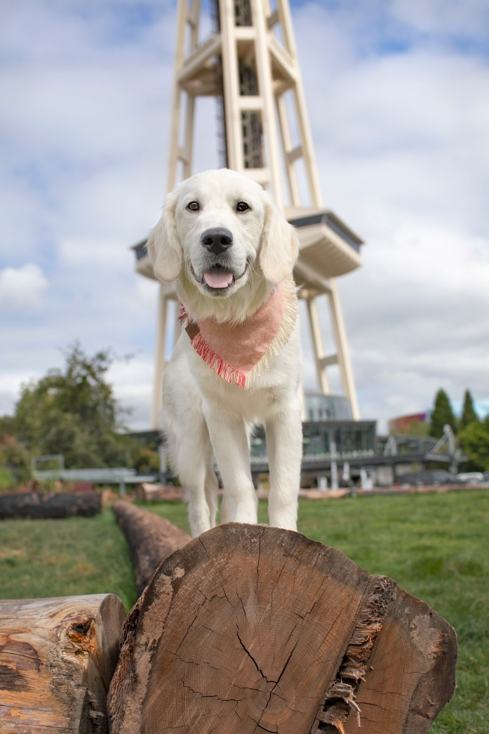 dog in front of the seattle space needle