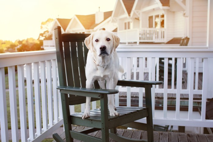 dog standing on rocking chair during sunset
