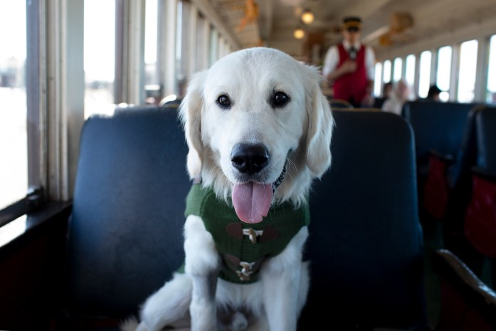 golden retriever wearing a green sweater sitting on a train car seat