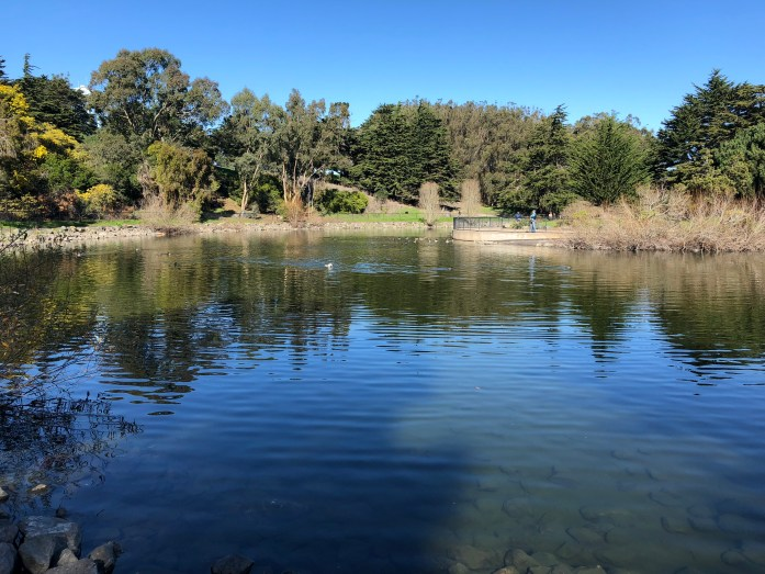 dog friendly swimming hole in san francisco at mcclaren park