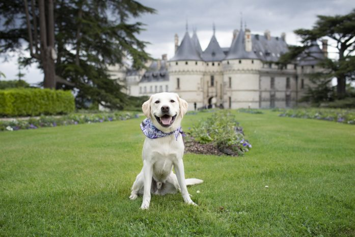 dog friendly chateau du chaumont