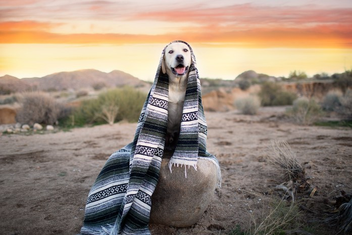 dog wrapped in blanket in the desert