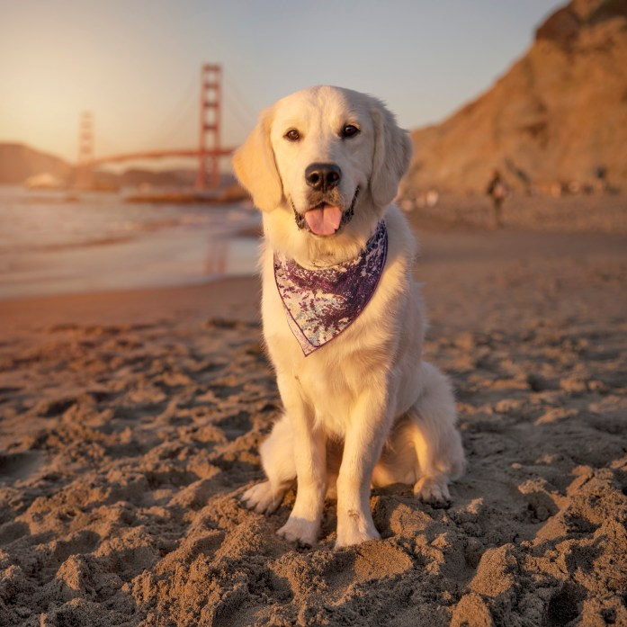 dog at baker beach at sunset in front of golden gate bridge