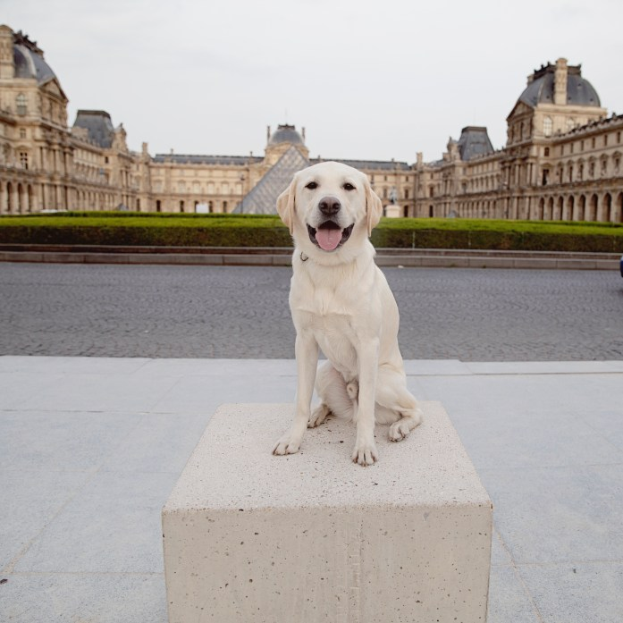 bringing a dog to the paris louvre pyramid