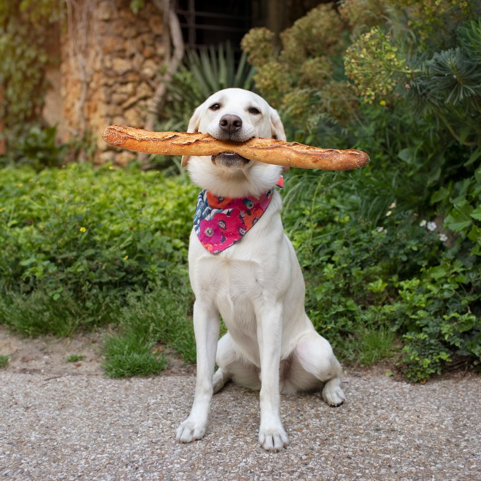 dog in paris holding baguette bread in his mouth