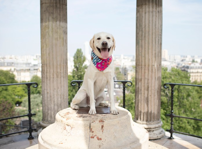 dog in paris wearing a floral bandana