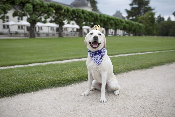 dog at gardens of chenonceau