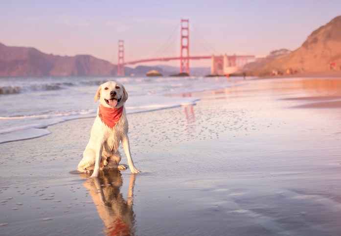 view of golden gate bridge from dog friendly baker beach