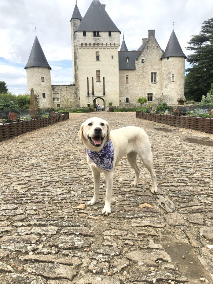 dog at chateau du rivau