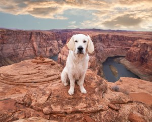Roadtrip activities with your dog through Nevada, Utah & Arizona