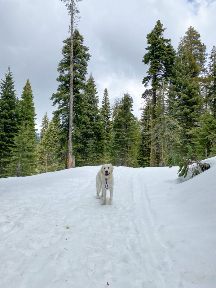 dog friendly trail in lake tahoe echo lake sno park