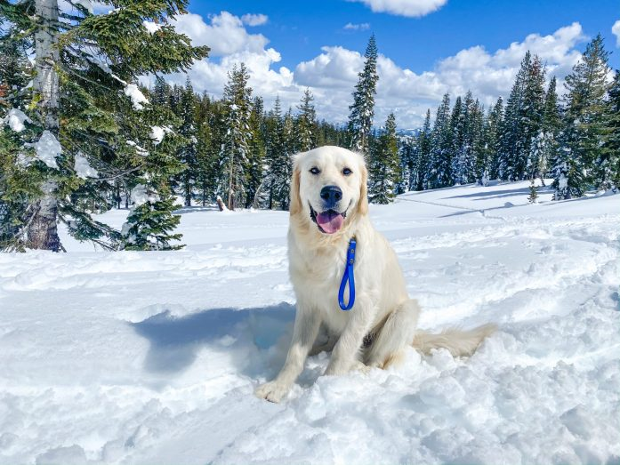dog friendly trail in lake tahoe to peter grubb hut