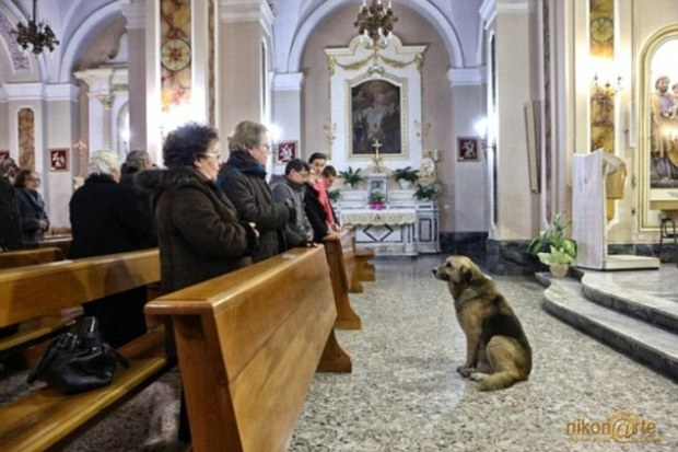 Every day when a church in Italy rings the bells, Ciccio, a 12-year-old dog comes along hoping to reunite with his dead friend again.