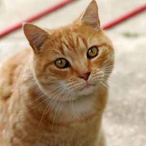 Calypso Pension Chats Vendée expectant cat