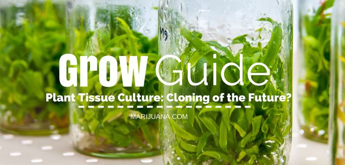 Plant Tissue Culture - Grow Guide