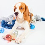 "December Is ""Reason for 'paws': Think About Pet Safety"""