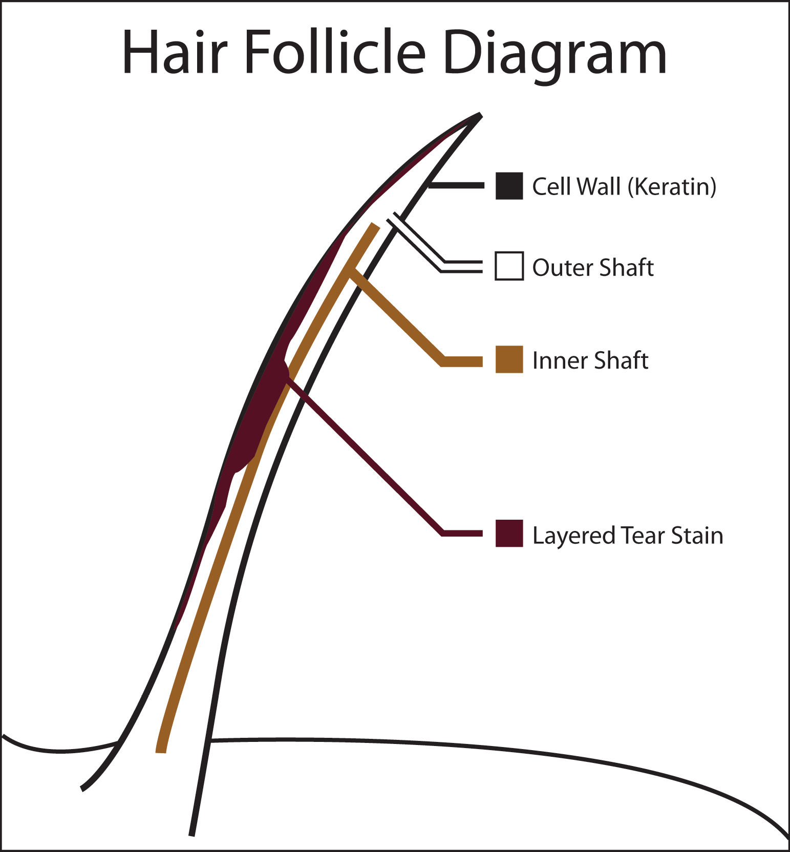 Dog Hair Structure