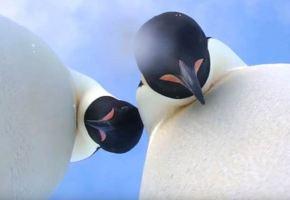Tierno selfie de pingüinos