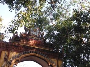 fruit-bats-around-the-temple-entrance