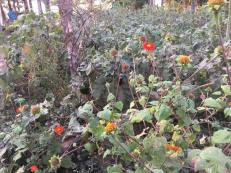 18-jan-homestay-garden
