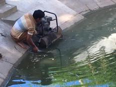 19-jan-turtle-pool